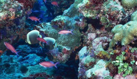Status of and Threat to Coral Reefs