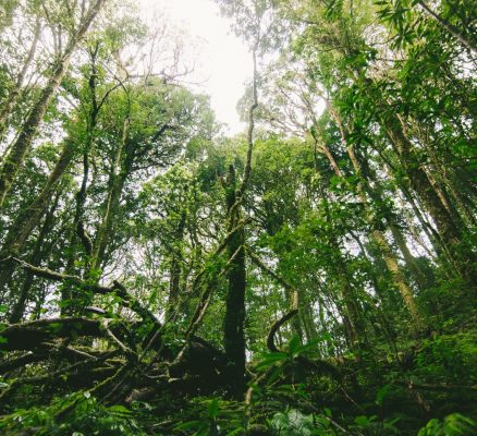 Four Habits of Citizens for Saving Forest