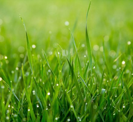 Climate Change is Forcing Grass to Germinate Faster